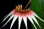 Продаются орхидеи,  редкие растения от Green Drop Home